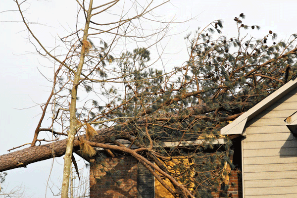 tree on roof