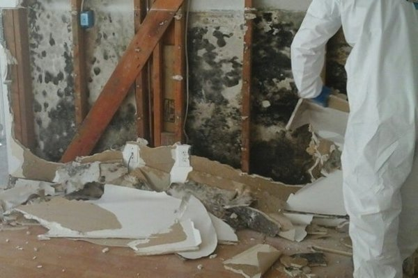 Does Homeowners Insurance Cover Mold Damage?